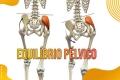 Equilíbrio Pélvico - Síndrome da Pelve Cruzada