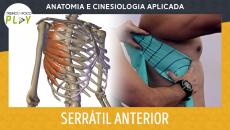 Anatomia e Cinesiologia - Serrátil Anterior