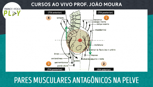 Pares musculares antagônicos na Pelve