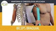 Anatomia e Cinesiologia - Bíceps Braquial