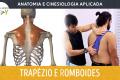 Anatomia e Cinesiologia - Trapézio e Romboides