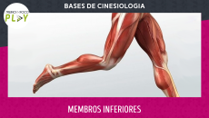 Bases de Cinesiologia - Membros Inferiores