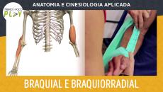 Anatomia e Cinesiologia - Braquial e Braquiorradial