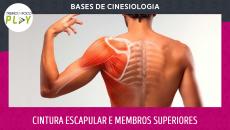 Bases de Cinesiologia - Cintura Escapular e Membros Superiores
