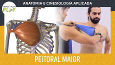 Anatomia e Cinesiologia - Peitoral Maior