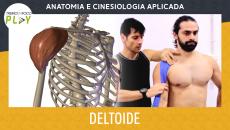 Anatomia e Cinesiologia - Deltoides