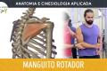 Anatomia e Cinesiologia - Manguito Rotador