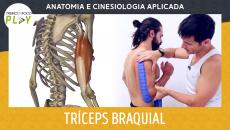 Anatomia e Cinesiologia - Tríceps Braquial